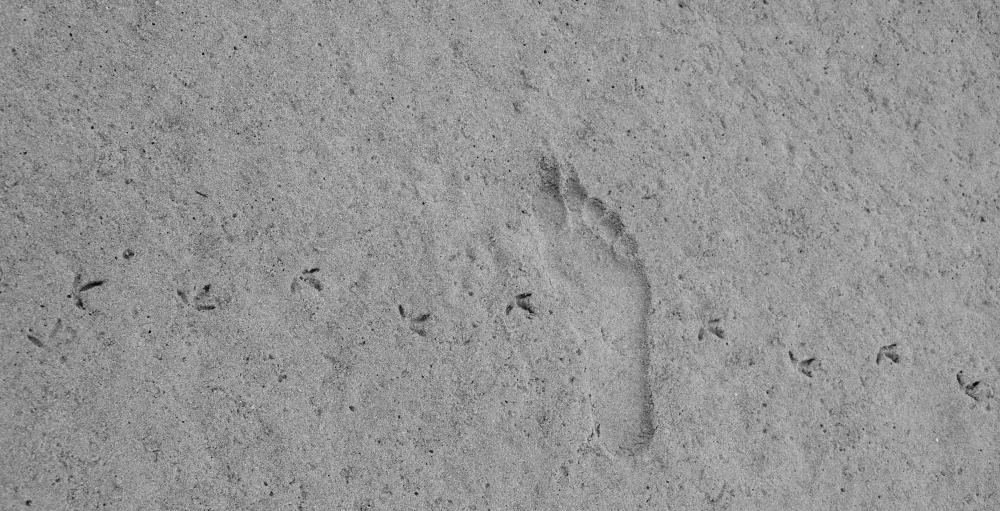 landschap-voetafdrukken2