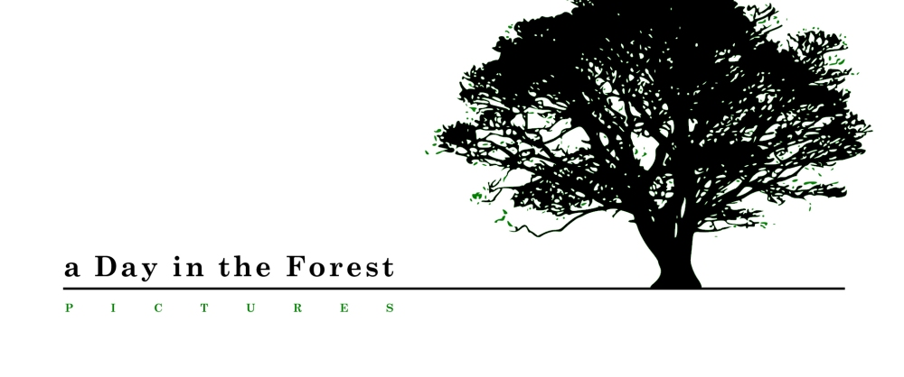 a Day in the Forest - Logo