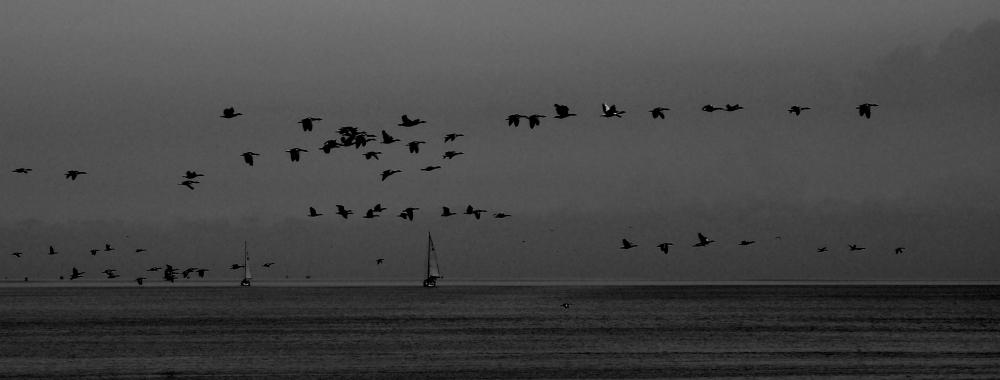 birds_DSC1128