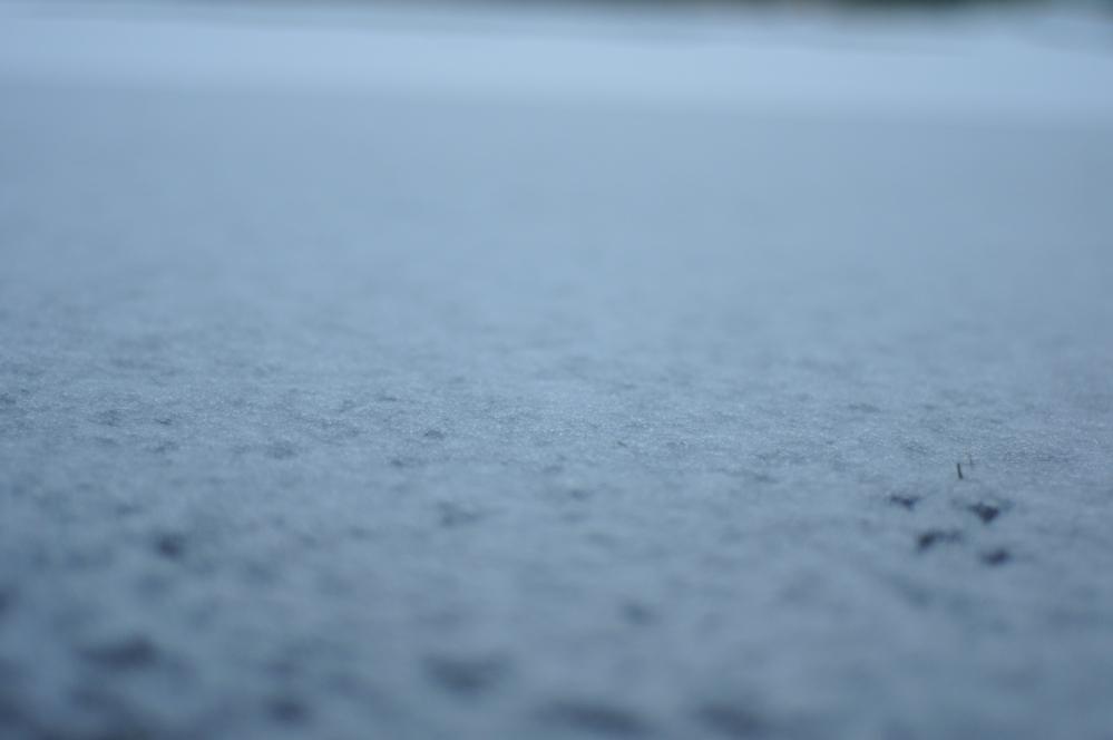 snow_white_DSC1527