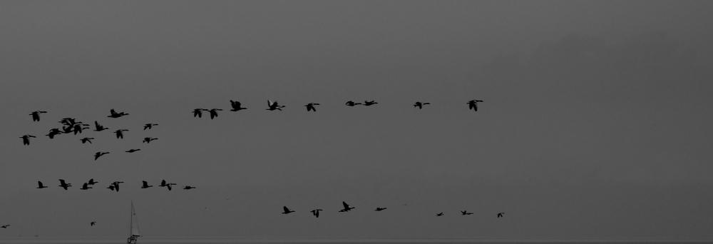 birds1_dsc1128