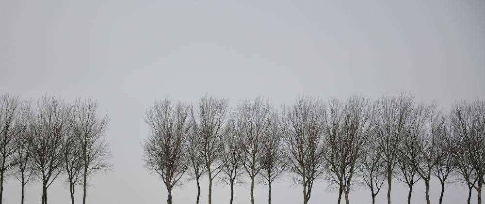 trees_dsc1798