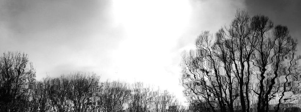 trees_DSC_0112