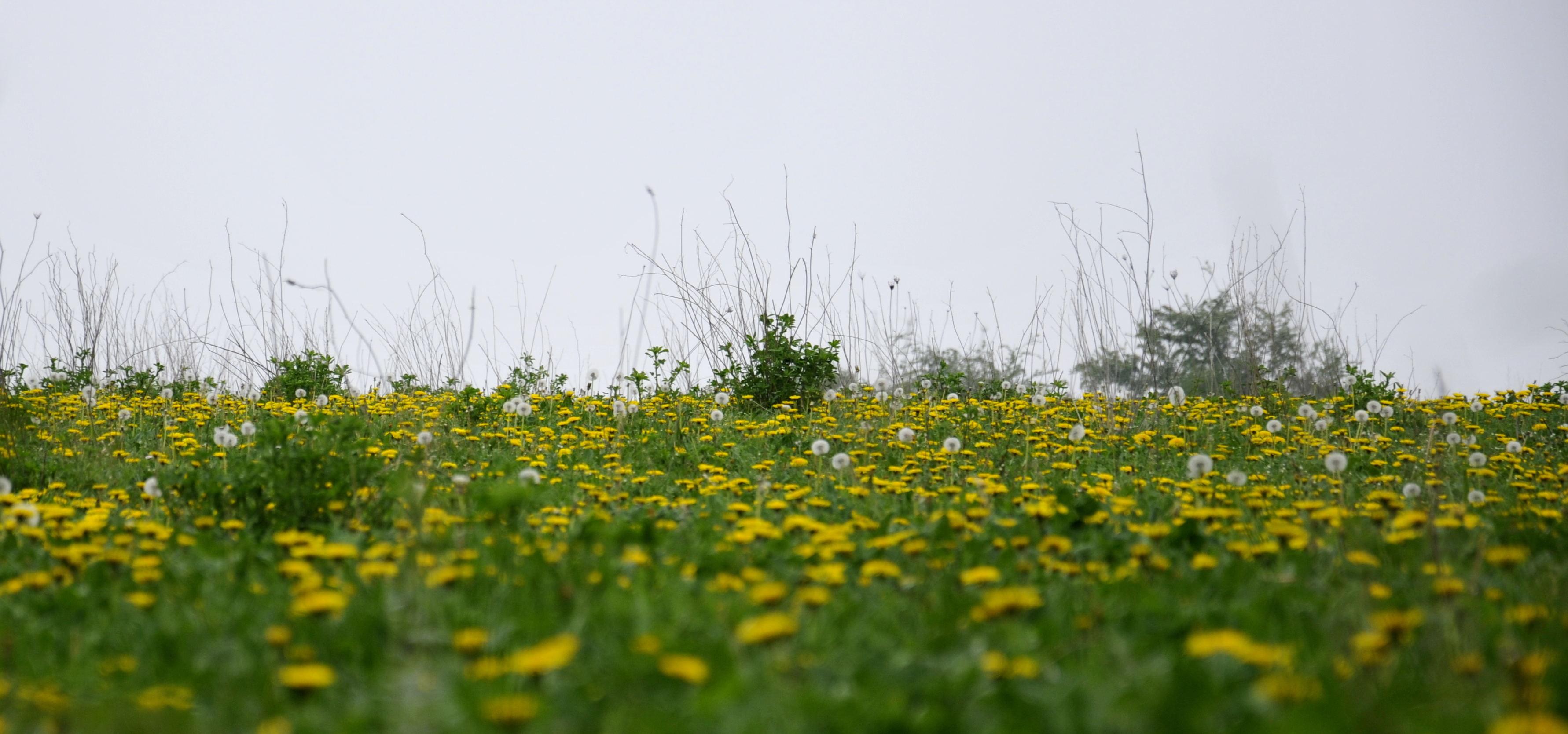 bloemenveld_DSC3451